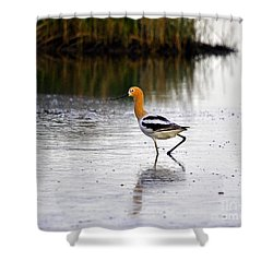 American Avocet Shower Curtain by Al Powell Photography USA