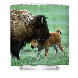 American Bison And Calf Yellowstone Np Shower Curtain by Suzi Eszterhas