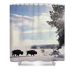 American Bison In Winter Shower Curtain by Tim Fitzharris