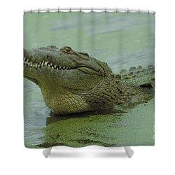 American Crocodile Shower Curtain by Raymond Cramm