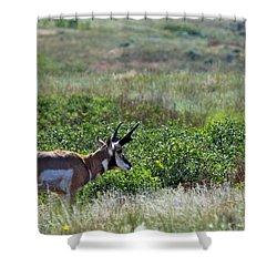 American Pronghorn Buck Shower Curtain by Karon Melillo DeVega