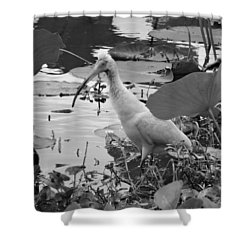 American White Ibis Black And White Shower Curtain by Dan Sproul