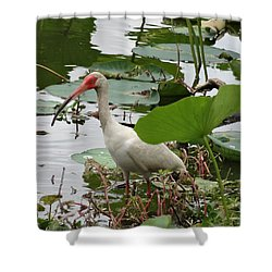 American White Ibis In Brazos Bend Shower Curtain by Dan Sproul