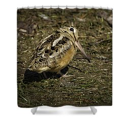 American Woodcock 2 Shower Curtain by Thomas Young