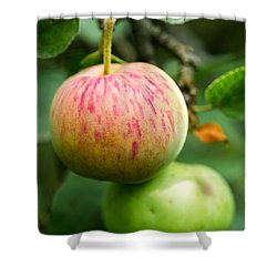 An Apple - Featured 3 Shower Curtain by Alexander Senin