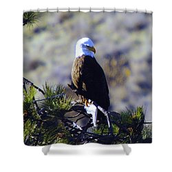 An Eagle In The Sun Shower Curtain by Jeff Swan
