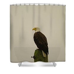 An Eagle Perched Shower Curtain by Jeff Swan