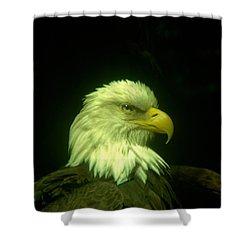 An Eagle Portrait Shower Curtain by Jeff Swan