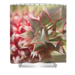 Ananas Comosus - Pink Ornamental Pineapple Shower Curtain by Sharon Mau