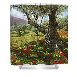 Andalucian Olive Grove Shower Curtain by Richard Harpum