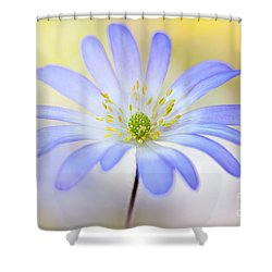 Anemone Blanda Shower Curtain by Jacky Parker