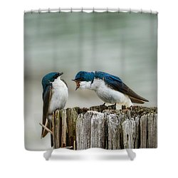 Angry Swallow Shower Curtain by Jai Johnson