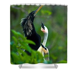 Anhinga Adult With Chicks Shower Curtain by Mark Newman