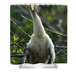 Anhinga Chick Shower Curtain by Mark Newman