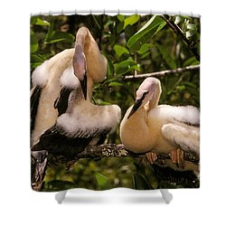 Anhinga Chicks Shower Curtain by Ron Sanford