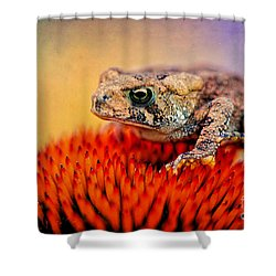 Another Fine Mess Shower Curtain by Lois Bryan