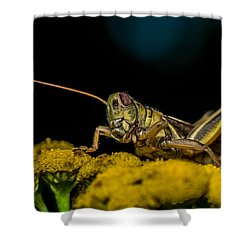 Antenna Down Shower Curtain by Paul Freidlund