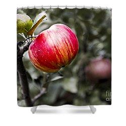 Apple Shower Curtain by Steven Ralser