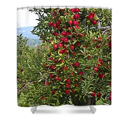 Apple Tree Shower Curtain by Anthony Sacco