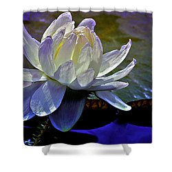 Aquatic Beauty In White Shower Curtain by Julie Palencia