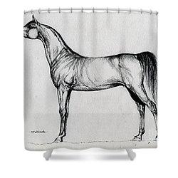 Arabian Horse Drawing 34 Shower Curtain by Angel  Tarantella