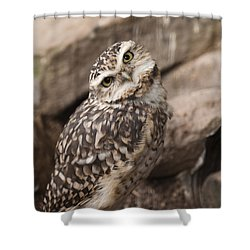 Are You Looking At Me? Shower Curtain by Anne Gilbert
