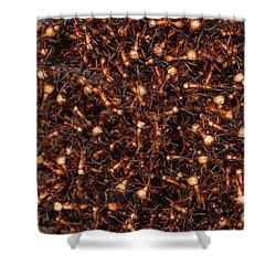 Army Ants Shower Curtain by Art Wolfe