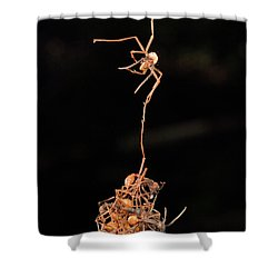 Army Ants Building Bivouac Shower Curtain by Mark Moffett