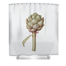 Artichoke Shower Curtain by Diana Everett