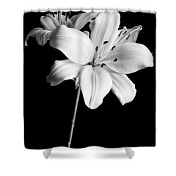Asian Lilies 2 Shower Curtain by Sebastian Musial