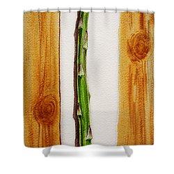 Asparagus Tasty Botanical Study Shower Curtain by Irina Sztukowski