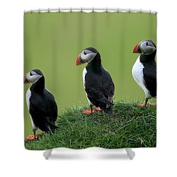 Atlantic Puffin Trio On Cliff Shower Curtain by Cyril Ruoso
