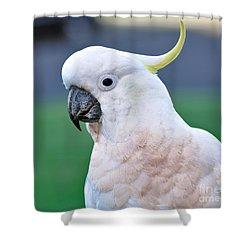 Australian Birds - Cockatoo Shower Curtain by Kaye Menner