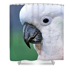 Australian Birds - Cockatoo Up Close Shower Curtain by Kaye Menner