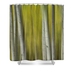 Autumn Aspen Tree Trunks In Their Glory Dreaming Shower Curtain by James BO  Insogna