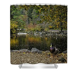 Autumn At Lithia Park Pond Shower Curtain by Diane Schuster