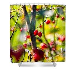 Autumn Berries  Shower Curtain by Stelios Kleanthous