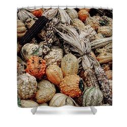 Autumn Gourds 2 Shower Curtain by Joann Vitali