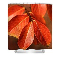 Autumn Leaves Shower Curtain by Joy Watson