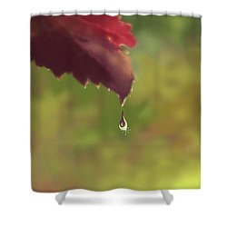 Autumn Rain Shower Curtain by Kume Bryant