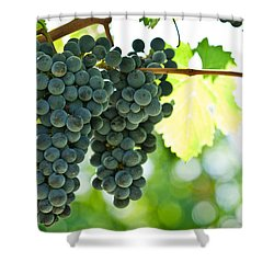 Autumn Ripe Red Wine Grapes Right Before Harvest Shower Curtain by Ulrich Schade