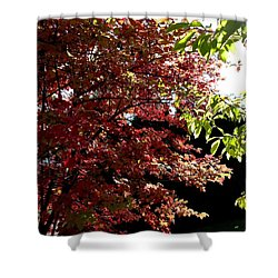 Autumn Snowball Bush Shower Curtain by Will Borden