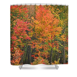 Autumn Woods Shower Curtain by Mary Carol Story