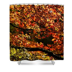 Autumn's Glory Shower Curtain by Anne Gilbert