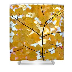 Autumn's Golden Leaves Shower Curtain by Jennie Marie Schell