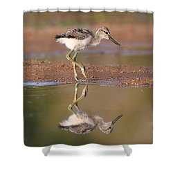 Avocet Chick  Shower Curtain by Ruth Jolly