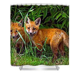 Babes In The Woods Shower Curtain by Steve Harrington