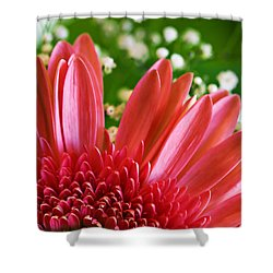 Babies Breath And Gerber Daisy Shower Curtain by Marilyn Hunt