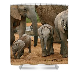 Baby African Elephants Shower Curtain by Bruce J Robinson