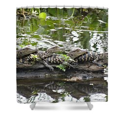 Baby Alligators Shower Curtain by Dan Sproul